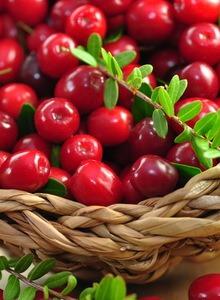 Cranberry 'Red Star' / Großfrüchtige Moosbeere / Gesundheitsbeere