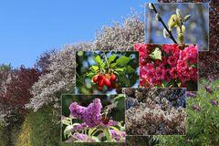 Bienen-Nährgehölz-Hecke aus 10 Pflanzen