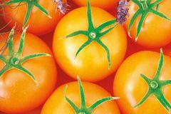 Carotin-Tomate 'Bolzano'