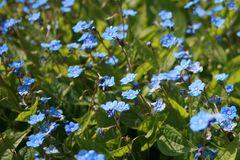 Frühlings-Gedenkemein