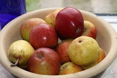 Ministämmchen Apfel 'Braeburn'
