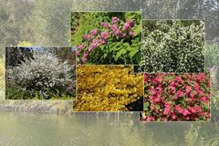 Zierstrauchhecke aus 10 Pflanzen