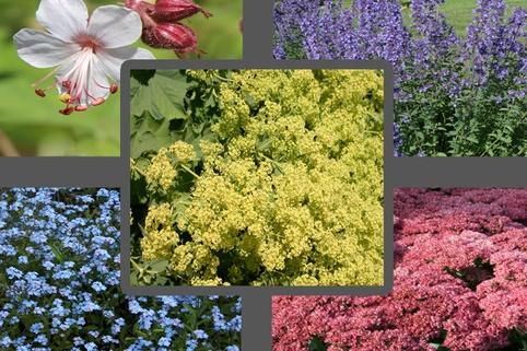 Bienen-Beet aus 10 bienenfreundlichen Stauden - Lockt Bienen, Hummeln & Schmetterlinge an!