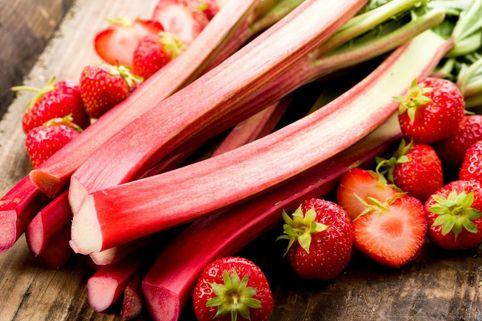Erdbeer-Rhabarber / Himbeer-Rhabarber 'Frambozen Rood' - Rheum rhabarbarum 'Frambozen Rood'
