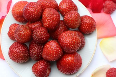 Erdbeere 'Sonata' - Fragaria 'Sonata'
