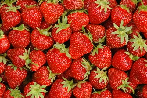 Erdbeere 'Dar Royal' ® - Fragaria 'Dar Royal' ®