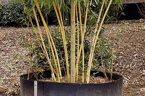 Dinies Bambus-Wurzelsperre - Dinies GmbH