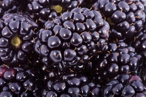 Brombeere Lubera ® 'Kiowa' - Rubus fruticosus 'Kiowa' Lubera ®