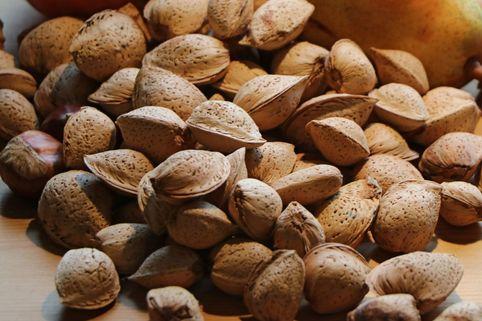 Krachmandel 'Palatina' - Prunus amygdalus 'Palatina'