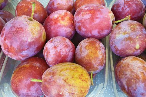 Pflaume 'Opal' - Prunus 'Opal'