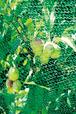 Dinies Vogelschutznetz