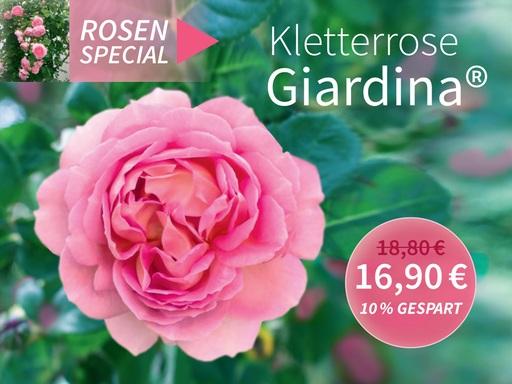 Rosa Giardina